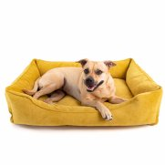 Pet Bed large